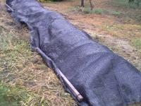 H220920キノコ畑