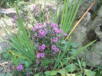 H220922秋の草花