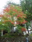 H221013鬼無里松巖寺の紅葉