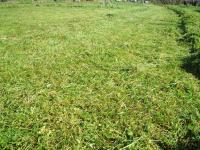 H221118白山草刈りアフタ