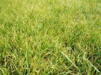 H221118白山草刈りビフォア
