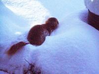 H230117雪で遊ぶモモ