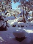 H230117雪の朝