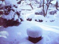 H230116雪の朝
