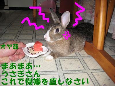 IMG_怒り6406