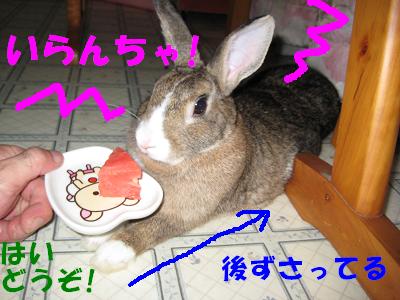 IMG_怒り6408