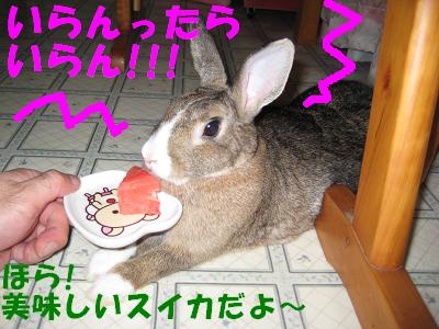 IMG_怒り6409