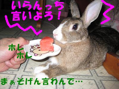 IMG_怒り6410