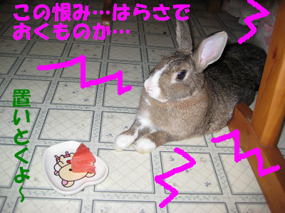 IMG_怒り6411