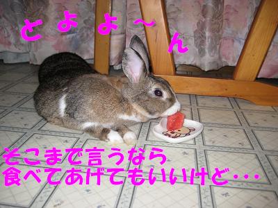 IMG_怒り6412