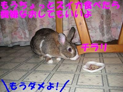 IMG_怒り6416