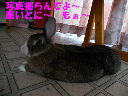 DSCNぼたちん0519