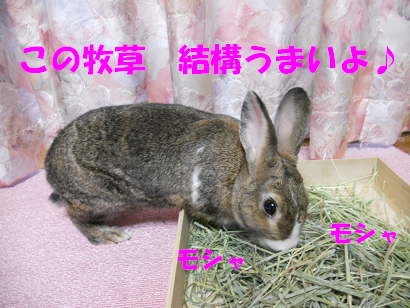 DSCN牧草0579