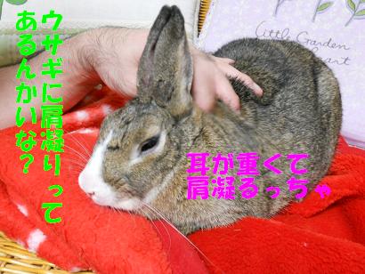 DSCNぬくぬく0553