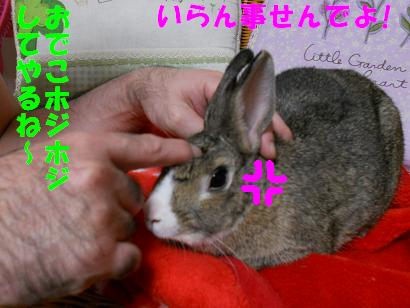 DSCNぬく0547