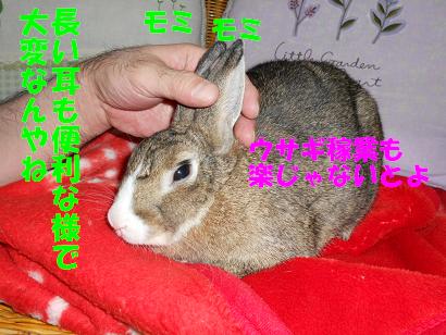DSCNぬくぬく0545