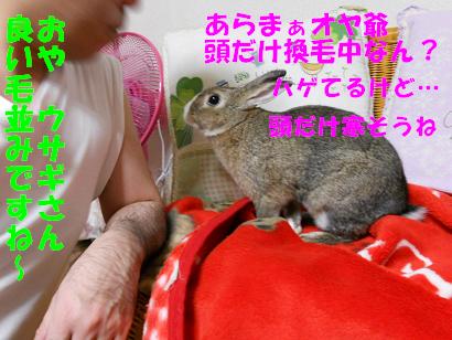 DSCNぬくぬく0556