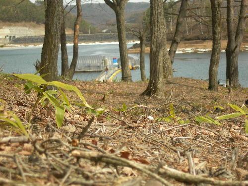 春の息吹が感じられる岩洞湖です
