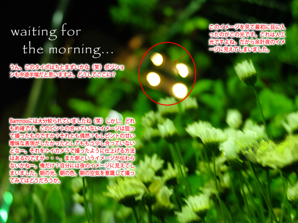 flower_take_kazu.jpg