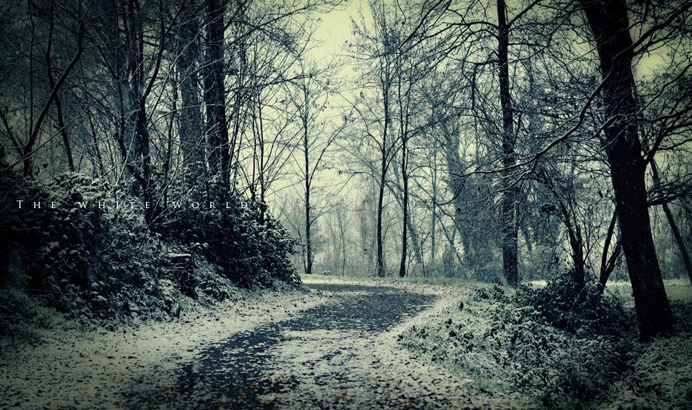 snow1_14b.jpg