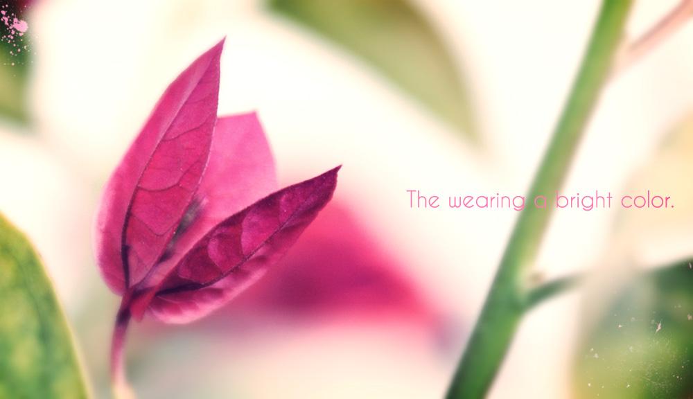 summer_flower02.jpg