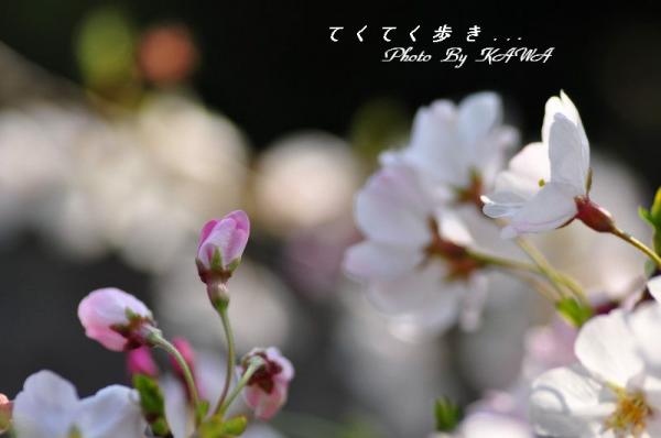 12DSC_3146.jpg