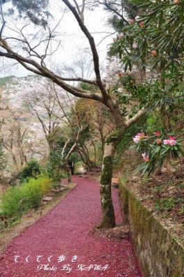 2丸山公園_3429