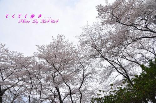 9鹿野川園地_3393