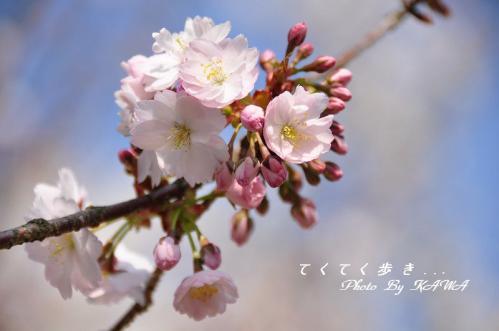 5西法寺_3961