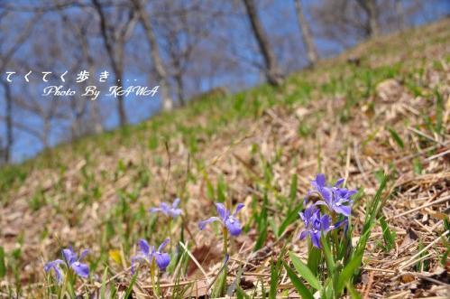 5エヒメアヤメ_3903