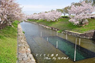 6赤坂泉_4214