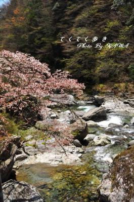 4瀬戸川_4511