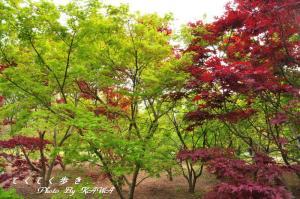 4緑化_4879