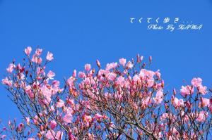 3篠山_4930
