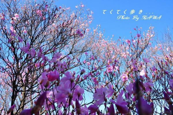 6篠山_4963