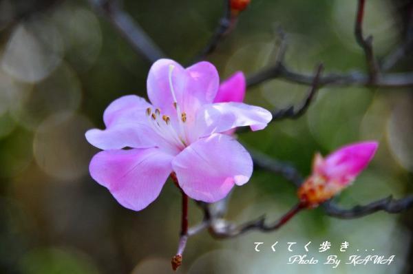 9篠山_4960