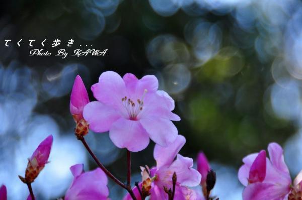 10篠山_4959
