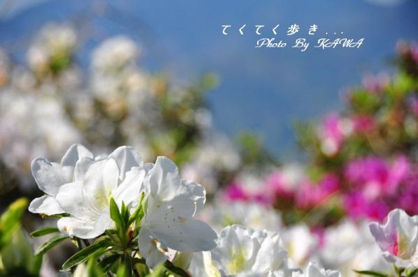 1冨士山_5137