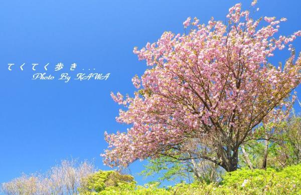 12冨士山_5128