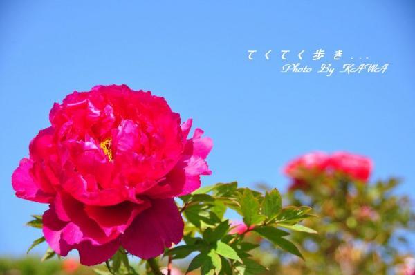 5今治_5229