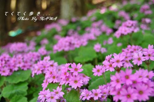 3山草園_6027