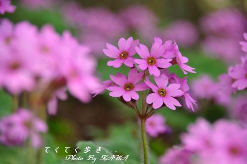 4山草園_6035