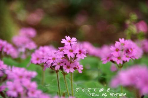 5山草園_6042