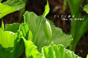 8山草園_6056