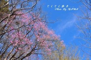 5稲叢_6254