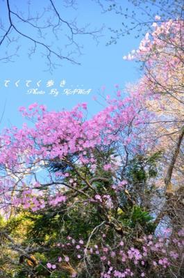 5林道11.05.15