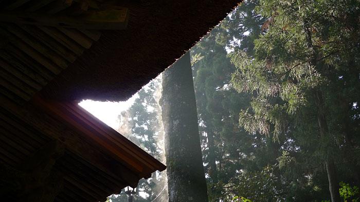 弥彦神社 新潟県 16