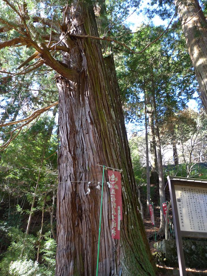 金桜神社 山梨 5