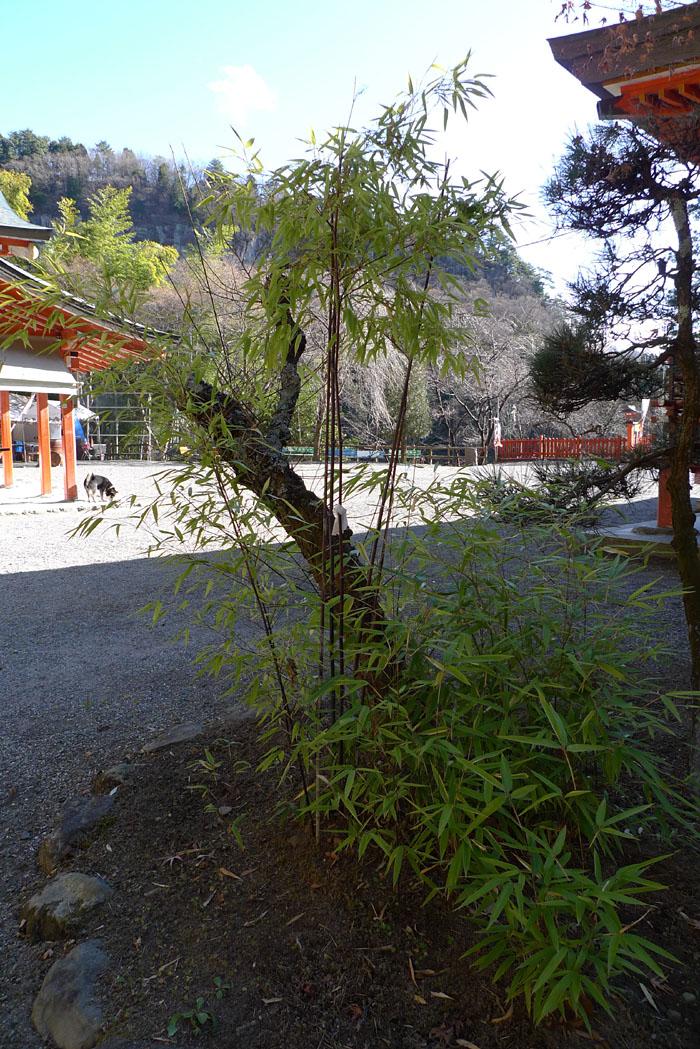 金櫻神社 山梨 12