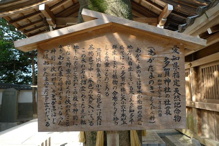 多賀神社 常滑 11